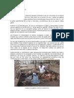 Guia Modulo Operacional- Ficha Tecnica Gallinas Criollas