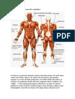 Cuidados del sistema musculo esqueletico.docx