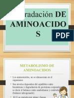 degradacion-de-aminoacido