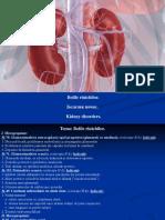 8.-Bolile-rinichilor_0