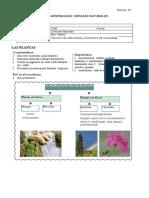 Guía de aprendizaje Ciencias - Clasificación de las plantas