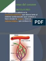 Venas y Arterias Del Corazon