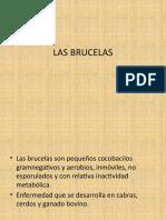Las brucellas 1.pptx