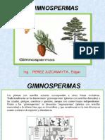 Gimnospermas ( 25).ppt