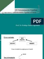 Clase XIII Determinación Genética del sexo y
