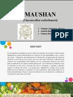 Maushan Ppt Final