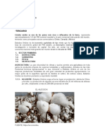 Sector Productivo.docx