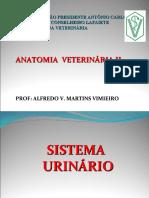 AULAS DE ANAT VET II - S  URINÁRIO    RENAL - ALUNOS -  ALFREDO V. M. VIMIEIRO 2018