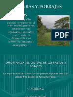 02-2 IMPORTANCIA DEL PASTO