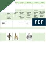 Cuadros y Resumen Botánica