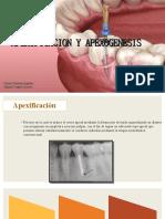 EndoII Apexificacion y apexogenesis