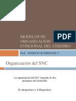 Modelos de organización funcional del cerebro