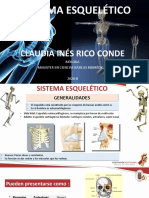 generalidades, apendicular, esqueletico II