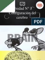 Unidad N° 3. El Cerebro.