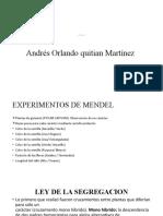 Genetica mendeliana_Andres Quitian