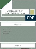 Morfologi dan Arsitektur Batang