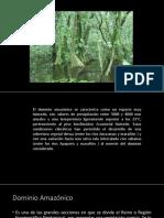 Dominio_Amazonico.pdf