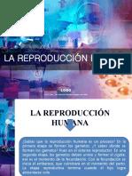 sistema reproductivo 6to
