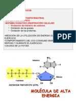 sistemasenergeticosfcglucoliticooxidativo-120902225440-phpapp02