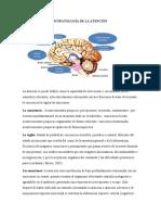 RESUMEN PSICOPATOLOGIA DE LA ATENCIÓN Elsy ,.docx