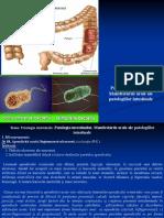 04. Patologia intestinală. Manifestările orale ale patologiilor intestinale._0