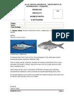 Practica 10 Informe Necton - Angel.docx