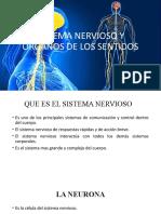 tutoria 3 anatomia y fisiologia