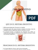 tutoria 4 anatomia y fisiologia