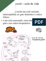 Toxoplasmose_03.ppt