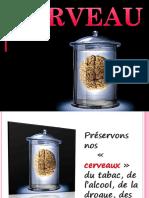 anatomie du cerveau.ppt