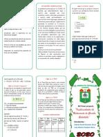 TRIPTICO Mi primer proyecto.pdf