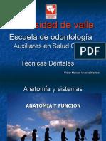 Anatomia y Examen fisico bucal
