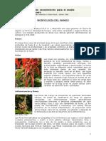 MORFOLOGIA DEL MANGO_No usar.pdf