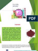 fosforo11-4-150818032317-lva1-app6891-convertido