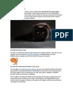 Superstición del gato negro