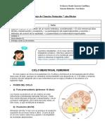 guia de ciclo menstrual y fecundación