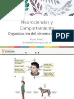 2. Organización_del_sistema_nervioso