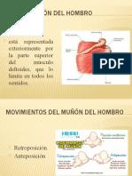 anatomía ppt