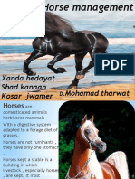 horse management.pptx