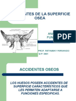 ACCIDENTES DE LA SUPERFICIE OSEA
