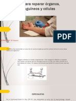 Un Chip Para Reparar Órganos, Vasos Sanguíneos