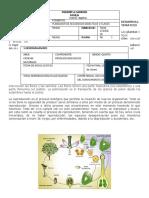 reproduccion_en_las_plantas (3).docx