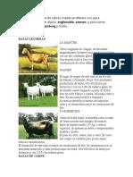Las principales razas de cabras criadas en México son