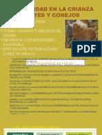 Lopez Huaraca Victor A. CUYES-CONEJOS