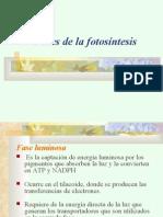 FotosintesisII