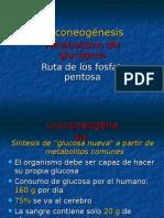 gluconeogenesis2