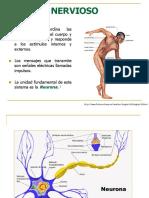 Sistema_nervioso.pptx