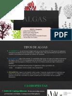 ALGAS 3-2.pptx