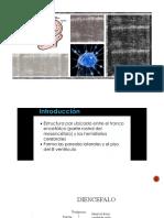 presentacion diencéfalo (2)