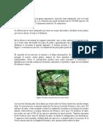 1-Partes de Los Insectos